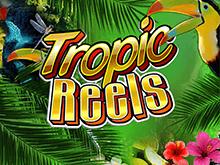 Автомат Tropic Reels с выводом денег